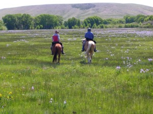 ワイオミング乗馬の休暇は、花のフィールドを乗り物を含み